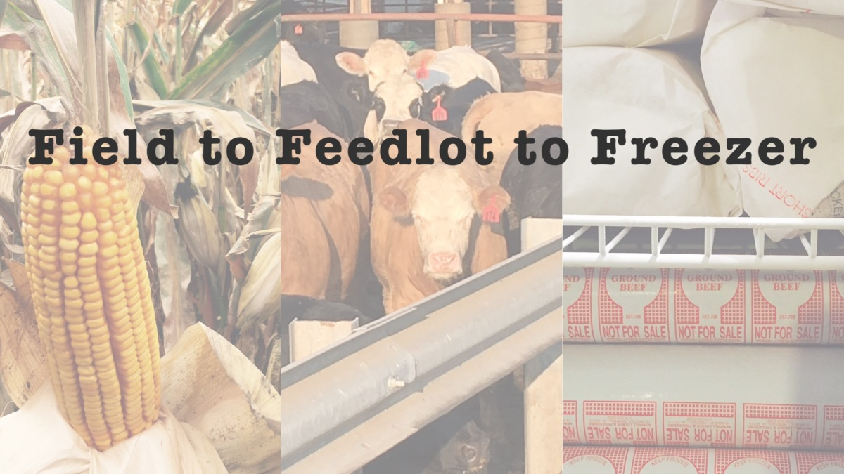 Field to Feedlot to Freezer